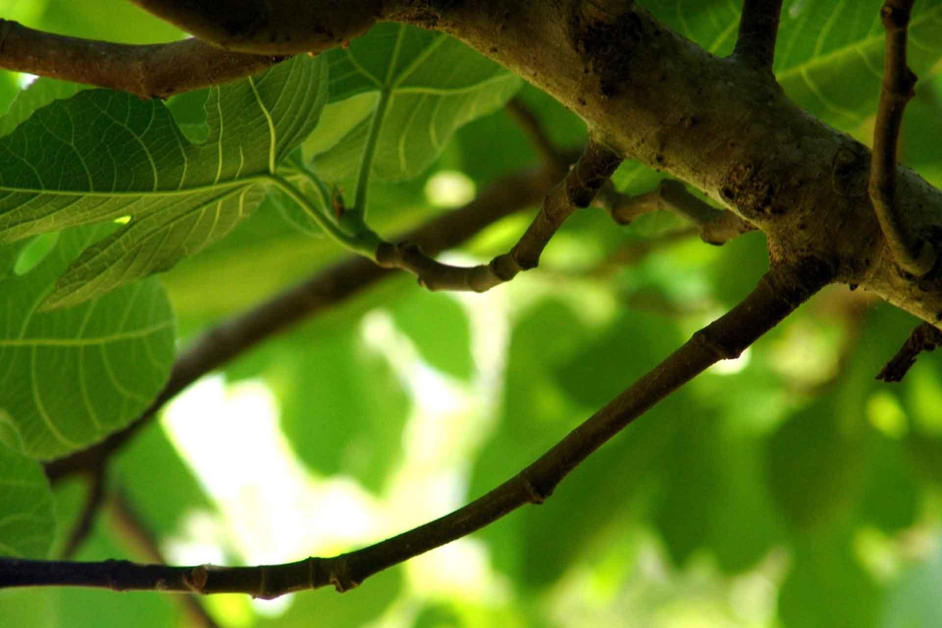 Federasyon, tuzak, esas niyetler ve incir yaprakları… – Mustafa Onurer